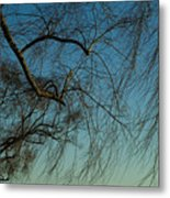 Branches Of A Weeping Willow Tree Metal Print
