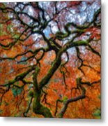 Branching Out In Autumn Metal Print