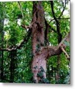 Branching Tree Metal Print