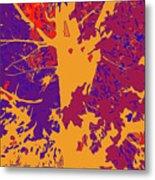 Brandywine  Maple Fall Colors 8 Metal Print