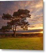 Bratley View Tree Metal Print
