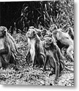 Brazil: Monkeys Metal Print