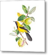 Brazilian Bird Metal Print