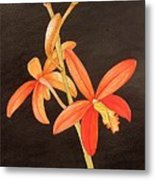 Brazilian Red Laelia-miniature Orchid Metal Print