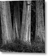 Breadth Of Trees Metal Print