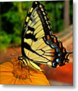 Breakfast At The Gardens - Swallowtail Butterfly 005 Metal Print