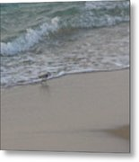 Breakfast At The Shore Metal Print