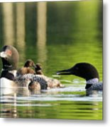 Loon Mom Serves Breakfast In Bed Metal Print
