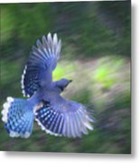 Breaking Jay Metal Print