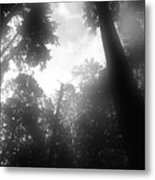 Breathing Trees Metal Print