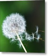 Breezy Dandelion Metal Print