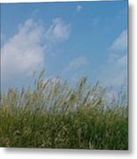 Breezy Day Metal Print