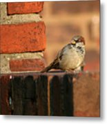 Brick And Bird Metal Print