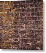 Vine Up A Brick Wall  Metal Print
