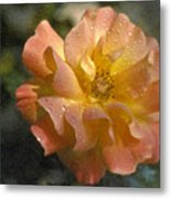 Bridal Pink Yellow Hybrid Tea Rose Genus Rosa Metal Print