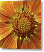 Bright And Sasy Metal Print