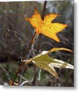Bright And Sunlit Leaf, Arizona Metal Print