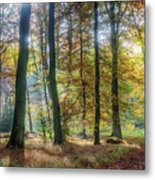 Bright Autumn Morning Metal Print