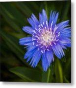 Bright Blue Aster Metal Print
