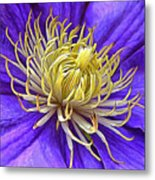 Bright Clematis Center Metal Print