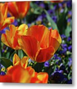 Bright Colored Garden With Striped Tulips In Bloom Metal Print