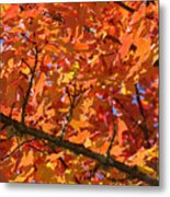 Bright Colorful Autumn Tree Leaves Art Prints Baslee Troutman Metal Print