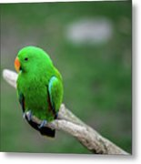 Bright Green Parrot Metal Print