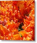 Bright Orange Rhodies Art Prints Canvas Rhododendons Baslee Troutman Metal Print