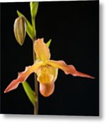 Bright Orchid Metal Print