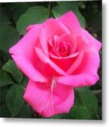 Bright-pink Rose 049 Metal Print
