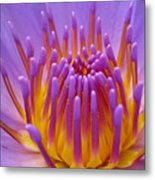 Bright Purple Lotus Metal Print