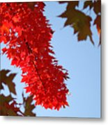 Bright Red Sunlit Autumn Leaves Fall Trees Metal Print
