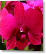 Bright Scarlet Red Orchid Metal Print