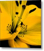 Bright Star Metal Print
