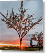 Bright Sun With Long Red Rays Shines Near The Trunk Metal Print