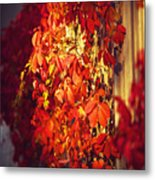 Bright Sunny Red Autumn Plants Metal Print