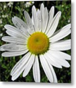 Bright White Flower With Water Droplets Metal Print
