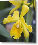 Bright Yellow Cattleya Orchid Metal Print by Allan Seiden - Printscapes