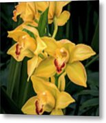 Bright Yellow Orchids Metal Print