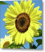 Bright Yellow Sunflower Art Prints Blue Sky Baslee Troutman Metal Print