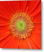 Brighteyes Metal Print