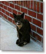 Brighton Cat Metal Print
