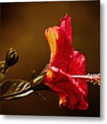 Brilliant Hibiscus Metal Print