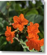 Brilliant Orange Tropical Flower Metal Print