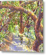 Briones Forest Near Springhill Road Metal Print