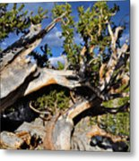 Bristlecone Great Basin Landscape Metal Print