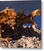 Bristlecone Pine - White Mountains Metal Print