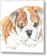 British Bulldog Puppy  Metal Print