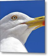 British Herring Gull Metal Print