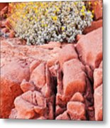 Brittlebush Bloom Metal Print